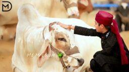 Bakra Eid Mubarak WhatsApp Status Eid Ul Azha Mubarak Status Qurbani Karenge Status Download